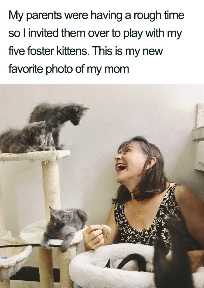 22. Everything is better with kittens.