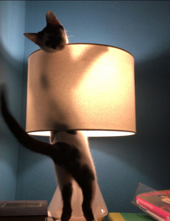12. The lamp is better this way.