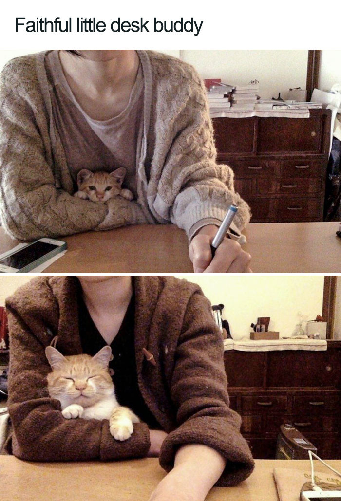 25. Time makes relationships with cats better.