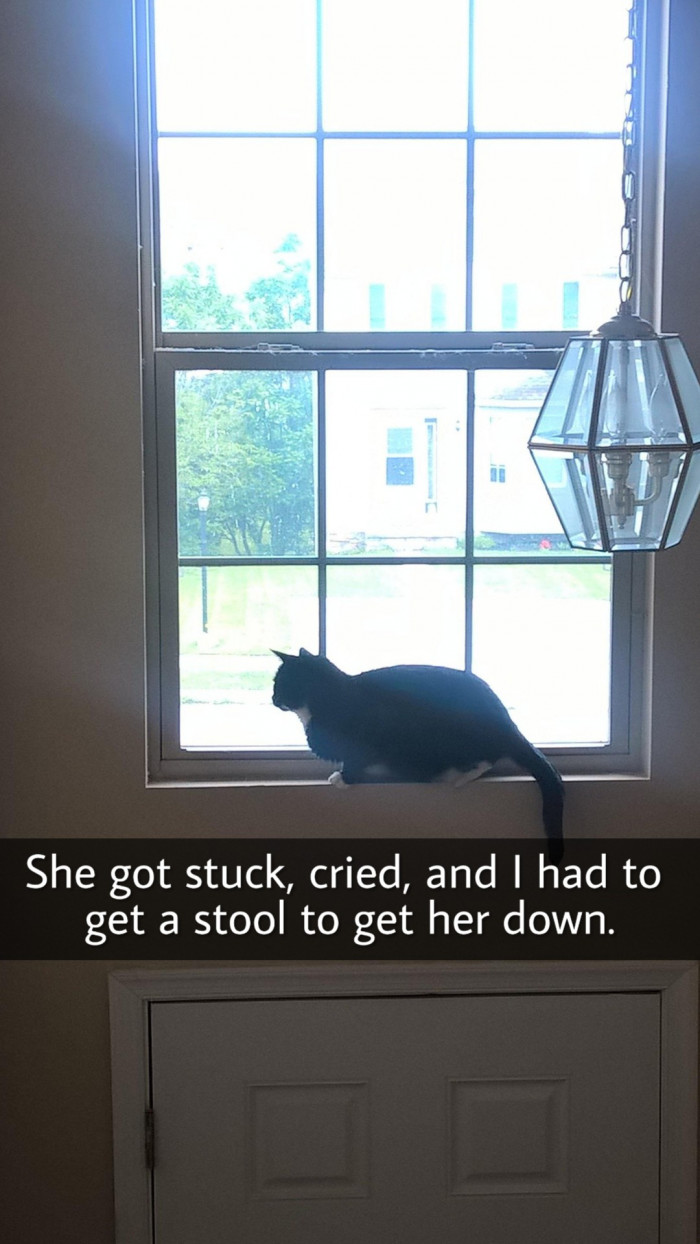 21. On top of the front door, there sits a sweet cat. But then she gets stuck there, so I guess that's that.